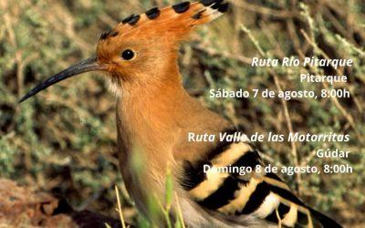 Rutas Ornitológicas en Gúdar y Pitarque. 7 y 8 de Agosto